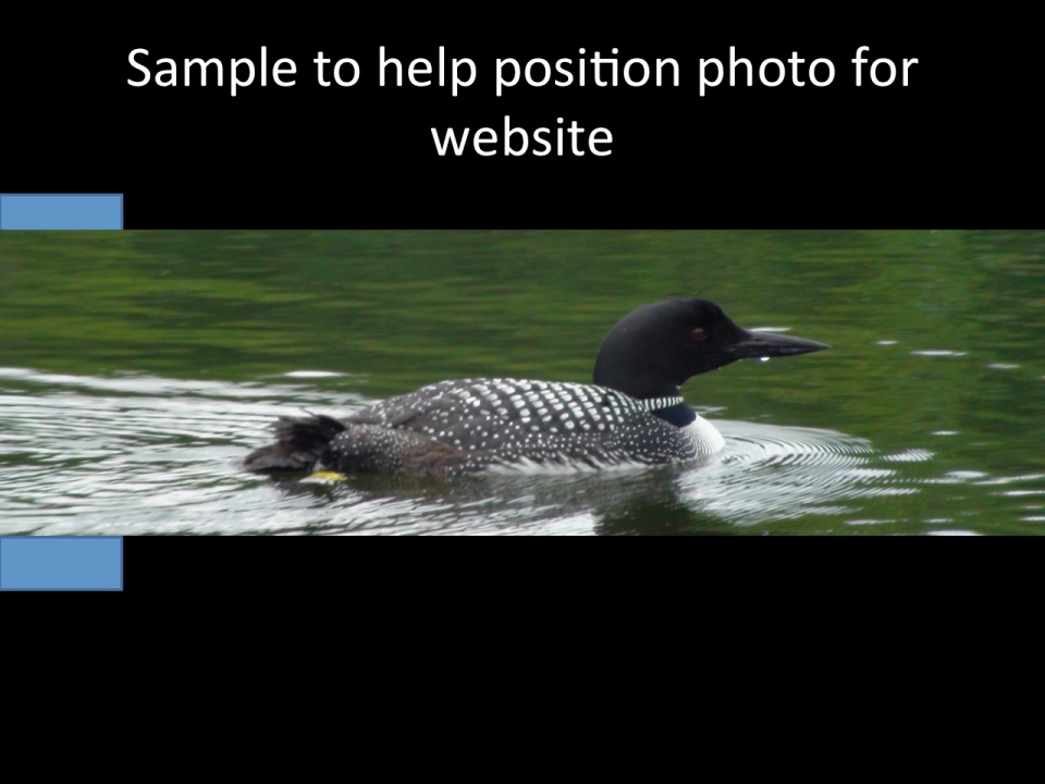 banded loon, take 2
