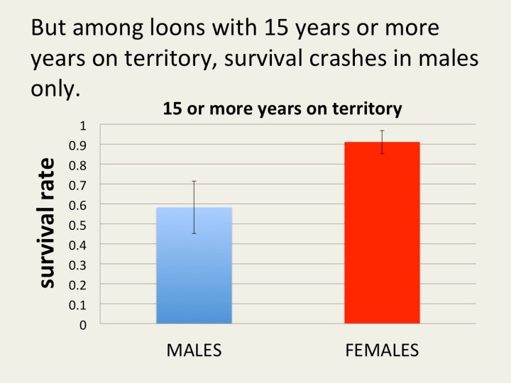 old males die at a much higher rate then females
