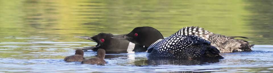 The Loon Project